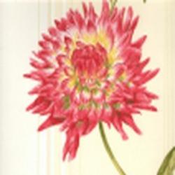 Обои Antonina Vella Botanica, арт. VB6740