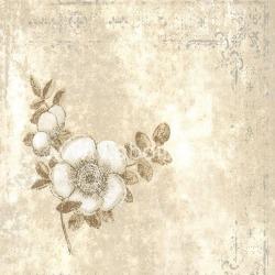 Обои Antonina Vella Sonata, арт. OP0512