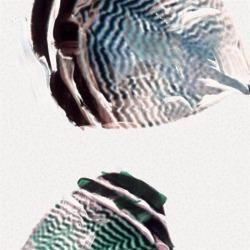 Обои Casamance Oxymore 2, арт. 77580117