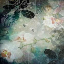 Обои ID Wall Ботаника, арт. ID-048015 Orchid