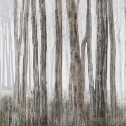 Обои Inkiostro Bianco Vol.3.1, арт. INKGFAY1501