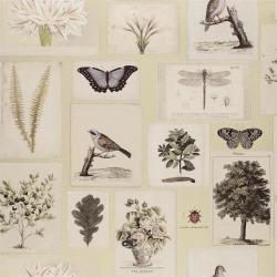 Обои John Derian Picture Book, арт. PJD6001-03