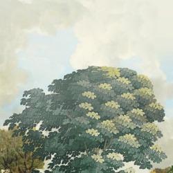 Обои Khroma Kent, арт. DGKEN2022