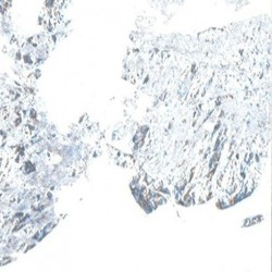 Обои Marburg HORUS, арт. 58714