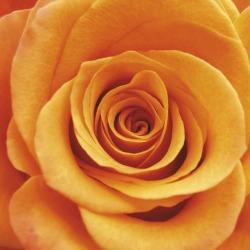 Обои ORTOGRAF Цветы, арт. 3155