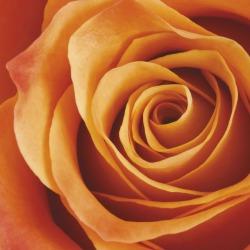 Обои ORTOGRAF Цветы, арт. 3160