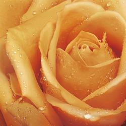 Обои ORTOGRAF Цветы, арт. 30415