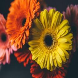 Обои PINEGIN Цветы, арт. 01010125
