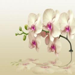 Обои PINEGIN Цветы, арт. 2020203
