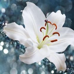 Обои PINEGIN Цветы, арт. 6464643