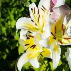 Обои PINEGIN Цветы, арт. 6464645