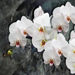 Обои PINEGIN Цветы, арт. 20202019
