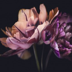 Обои PINEGIN Цветы, арт. 78787810