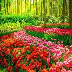Обои PINEGIN Цветы, арт. 78787816