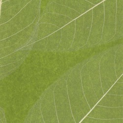 Обои Ronald Redding Designer Resource Grasscloth, арт. SE1802