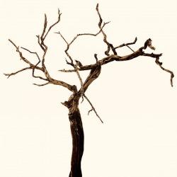 Обои Wall&deco Life 10, арт. CHERRY TREE